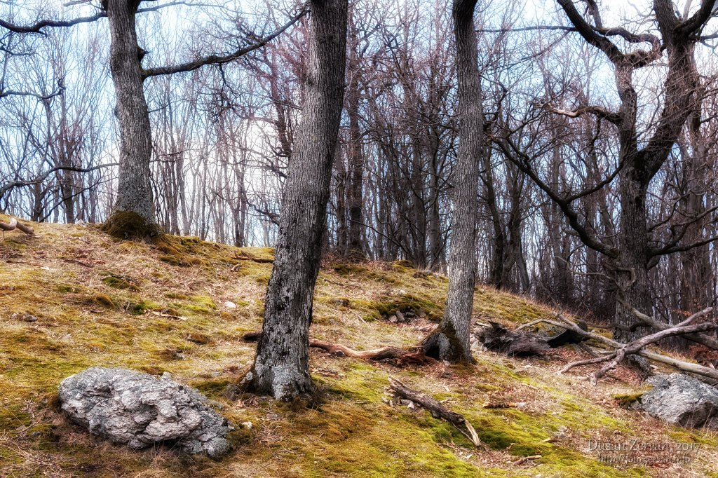 zo Selca na Inovec, 2017