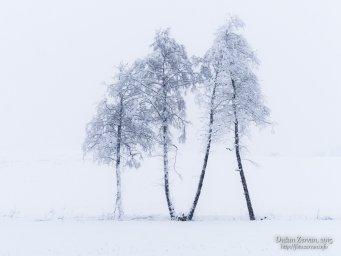 2015-01-30 biela zima